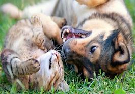 L'assurance responsabilité civile pour votre animal domestique